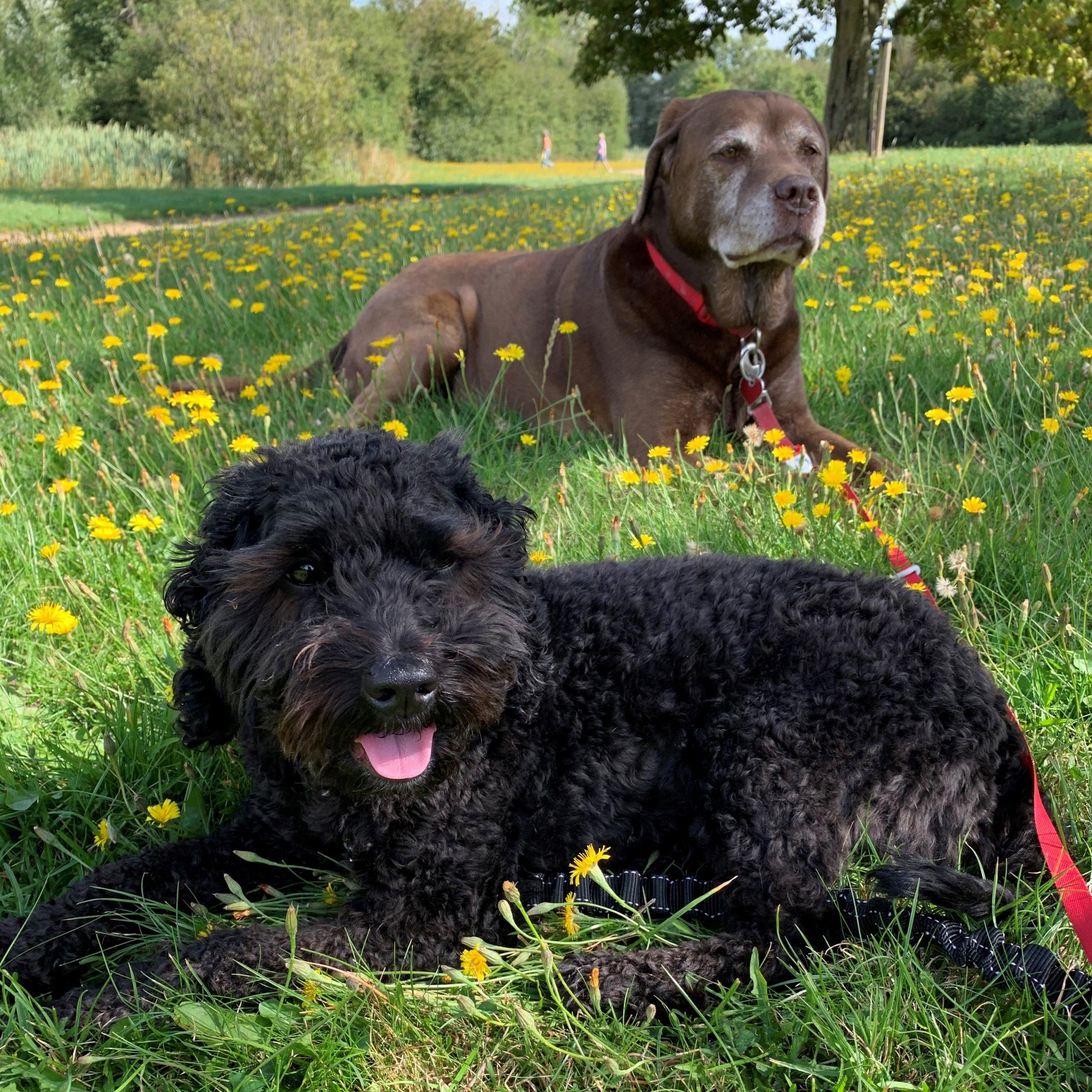Ruby & Alfie